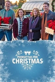 Poinsettias for Christmas (2018)
